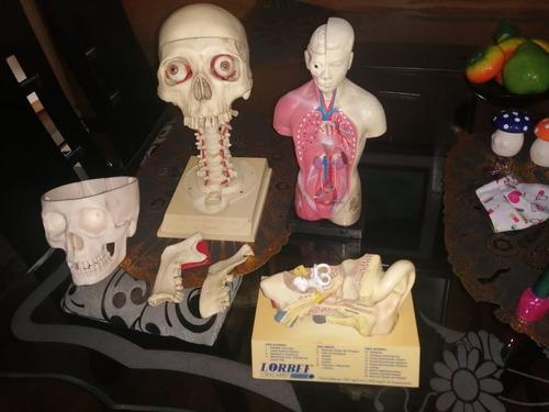 kit cuerpo humano