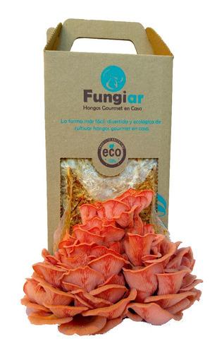 kit de cultivo de hongos - gírgolas rosadas - fungiar