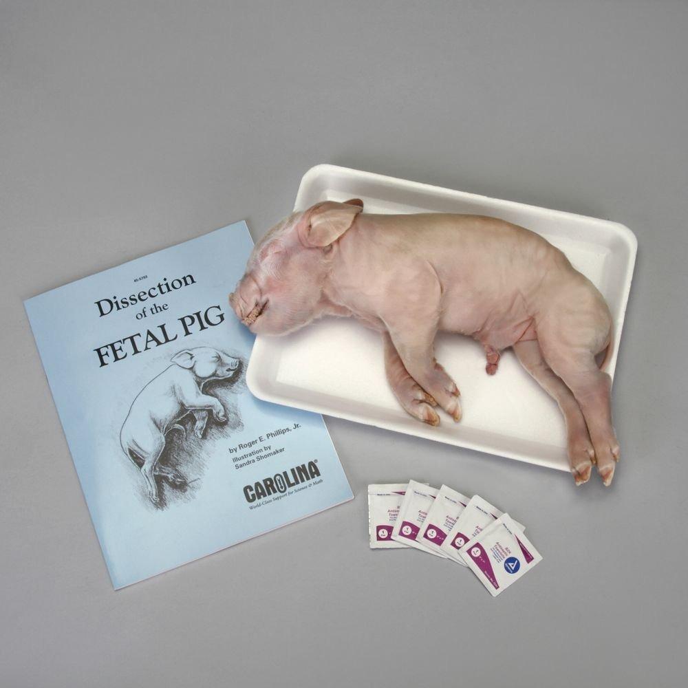 Kit De Disección De La Anatomía De Carolina Pig - $ 63.699 en ...