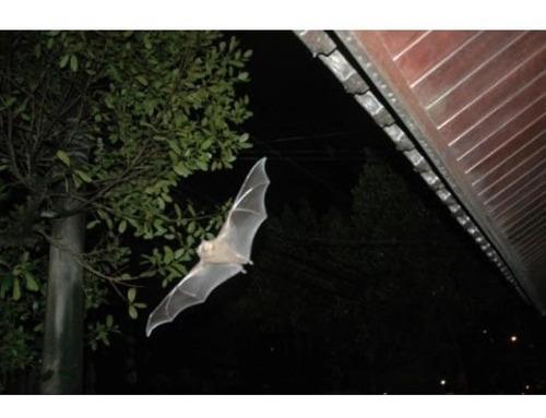 kit espanta rato e morcego 300m² com 1 emissor extra zebu