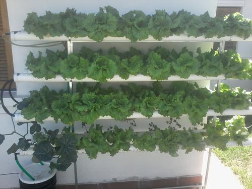 kit hidroponia sistema para 75 plantas completo