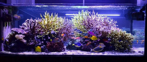 kit luminária 1mts barra tubo led iluminação aquário peixes
