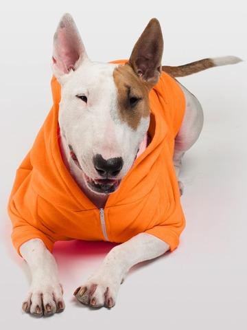 kit moldes patrones de ropa bolsos disfraces mascotas 2017