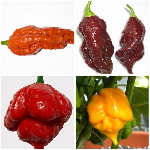 kit nuclear pimentas trinidad scorpion red +yellow+bhuts