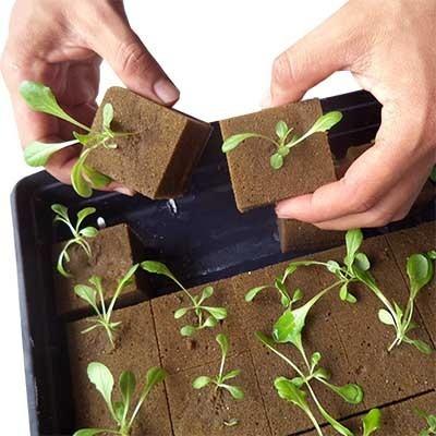 kit para cultivo urbano albahaca