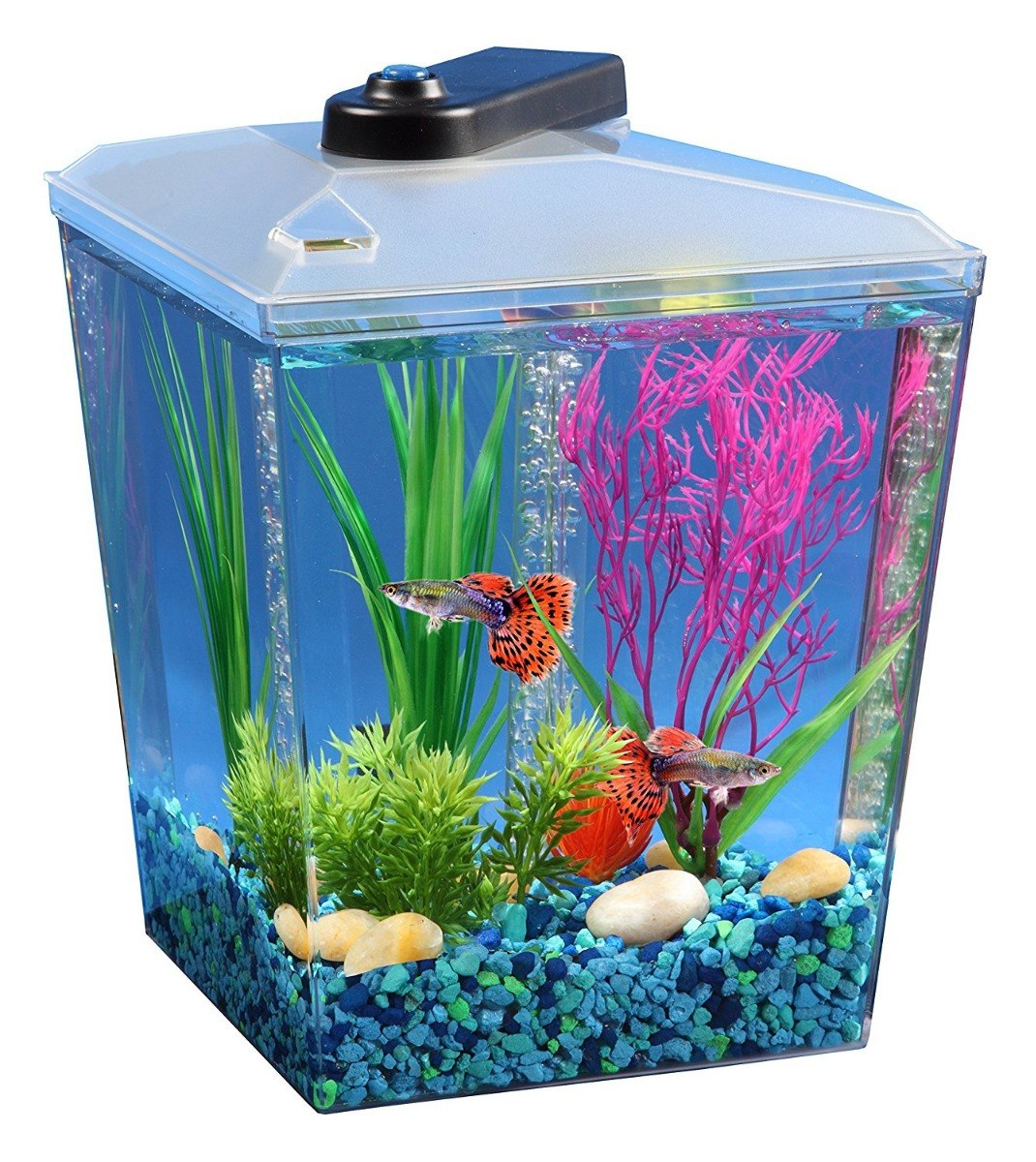 Kit pecera para pez betta 1 gal incluye envio for Red para peces de acuario