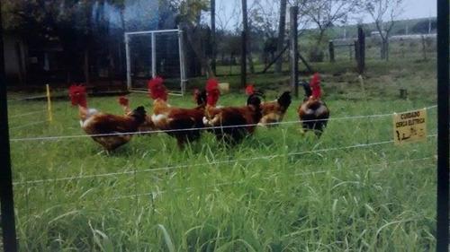 kit pet cerca elétrica animais cães gatos cachorros galinha