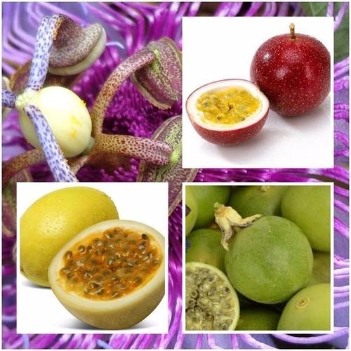 kit sementes de maracuja doce do mato amarelo roxo 04 tipos