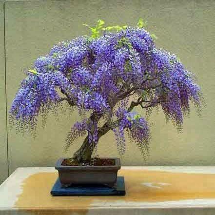 Kit semillas bons i u ornamentales 12 especies regalo for Especies ornamentales