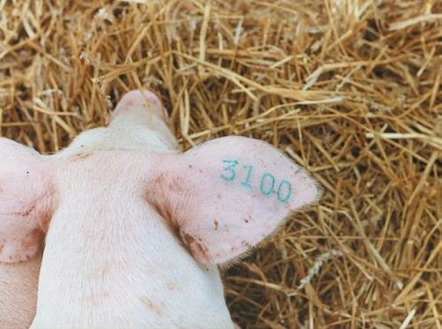 kit tatuadora 5/16  oveja(carnero) - cerdo - aves - mascotas