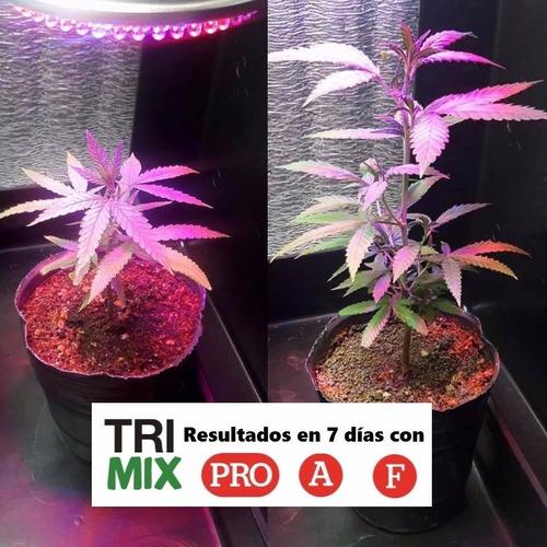 kit trimix treemix (5u) 200ml + regalo!  trimix pro, n, a, f y candy