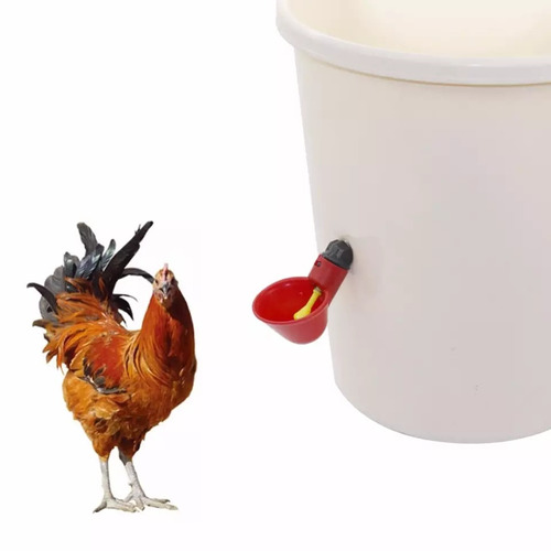 kit x50 und bebedero aves, codorniz, gallina, pollo.