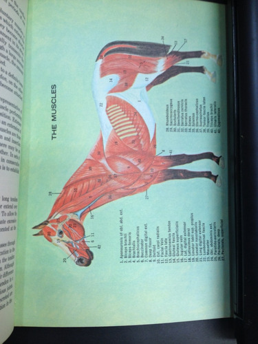 know the anatomy of the horse