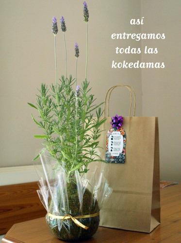 kokedama con flores oxalis regalo amigo jardin redondo