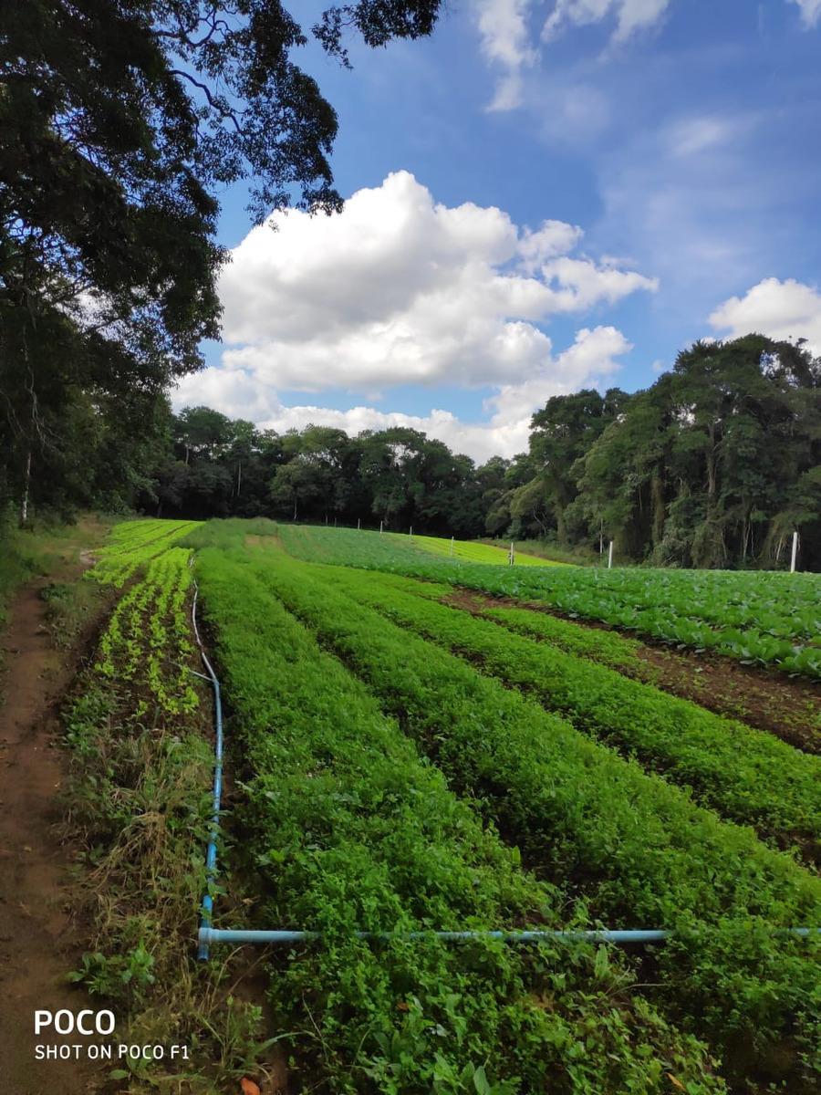 l. área para chácara, terrenos planos cercados de árvores