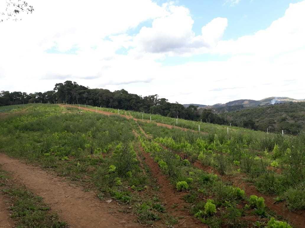 l. loteamento.  condomínio rural de ibiúna. bem demarcados