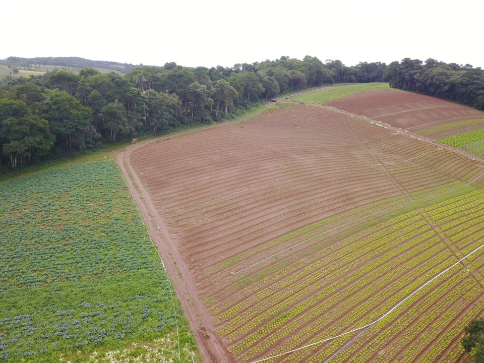 l. terrenos 90% planos para formar chácara, ibiúna