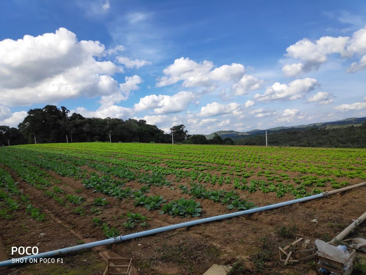 l. terrenos com área verde 33 mil, ibiúna local agradável