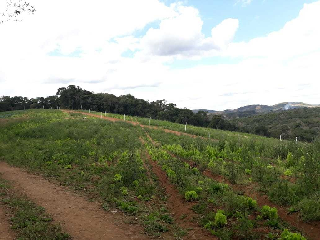 l. terrenos em ibiúna no bairro piaí.