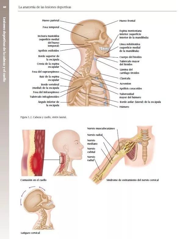 Increíble Anatomía Rebaje Lateral Galería - Anatomía de Las ...