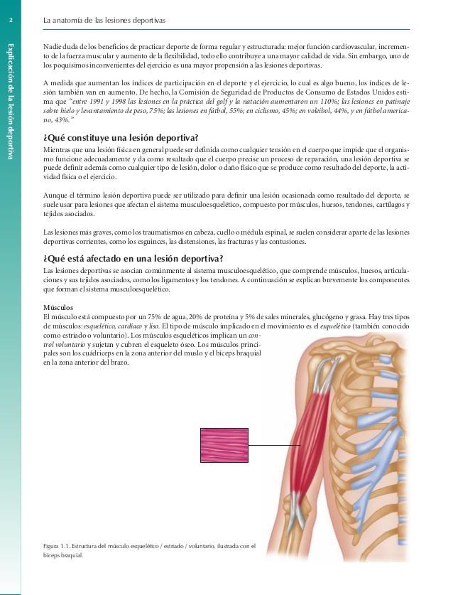Excepcional Anatomía Hernia Deportiva Modelo - Anatomía de Las ...