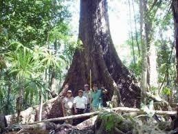 la isla, terreno paradisiaco para uso turístico c1748