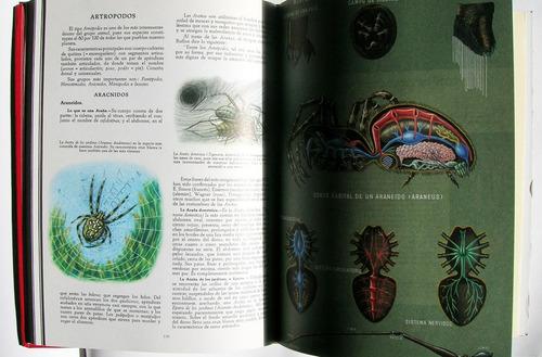 la naturaleza zoologia, invertebrados libro importado 1969