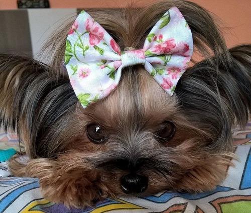 laços 5 lacinho de tecido cães pet shop