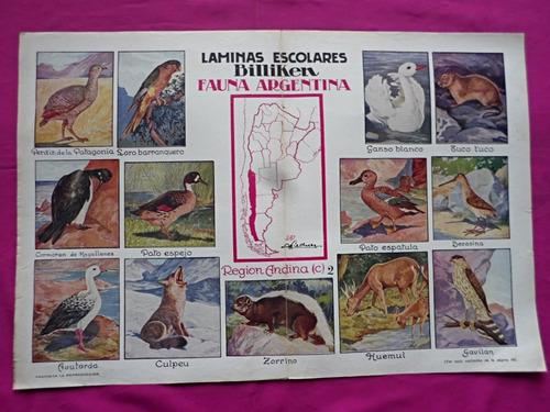 lamina billiken fauna argentina region andina (c) 2