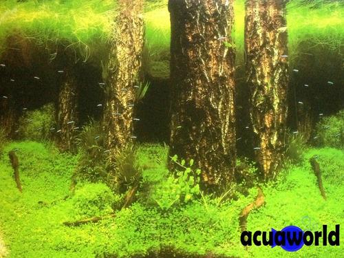 lamina de plantas pecera doble faz 60cm_acuarios_acuaworld
