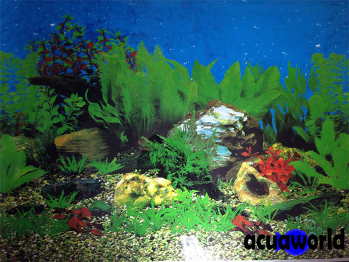 lamina doble rocas y plantas peceras_30cm_acuarios_acuaworld