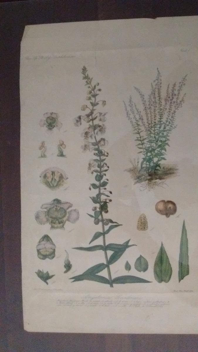 Láminas Botánica Argentina Para Enmarcar En Color - $ 550,00 en ...