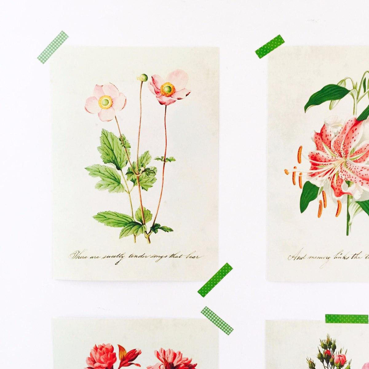 Laminas Botanicas Vintage Ilustraciones Flores 420 00 En