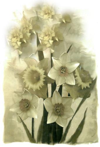 láminas con flores nº92