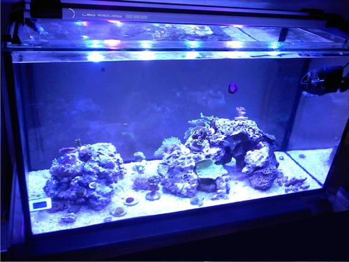 lampara de leds sumergible para acuario