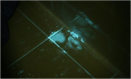 lampara luz negra c zoom led uv detecta alacranes envio inc