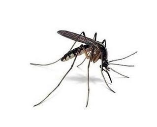 Lampara mata mosquitos zancudos moscas bs en - Lampara mata mosquitos ...