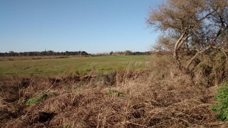 land - alvear