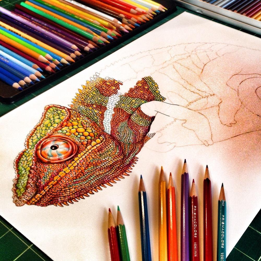 Lapices Colores Camaleon Chameleon Profesionales Dibujo Arte