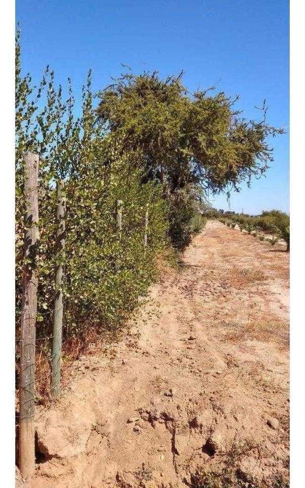las acacias 75