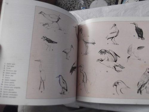 las aves acuaticas del alto apure gonzalo morales ilustrado