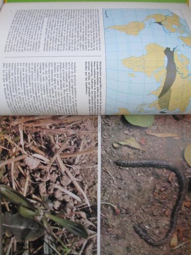 las grandes praderas valerio giacomini