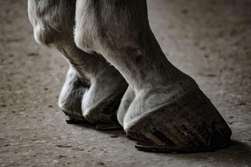 las patas