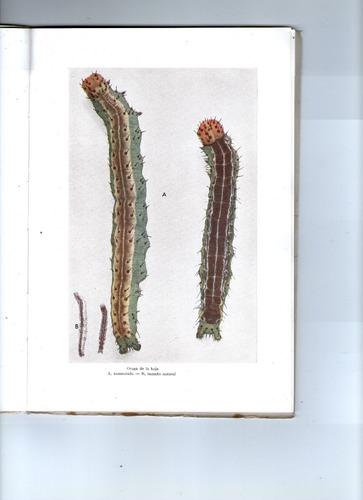 las plagas del algodonero. libro técnico con ilustraciones