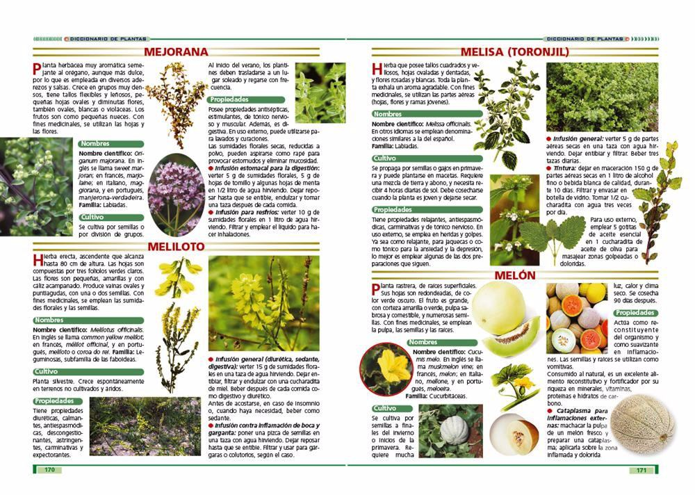 Las plantas y sus propiedades curativas u s 40 00 en for Planta decorativa con propiedades medicinales