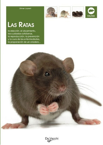 las ratas, olivier laurent, vecchi