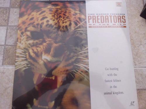laser disc predators of the wild cheetah & leopard