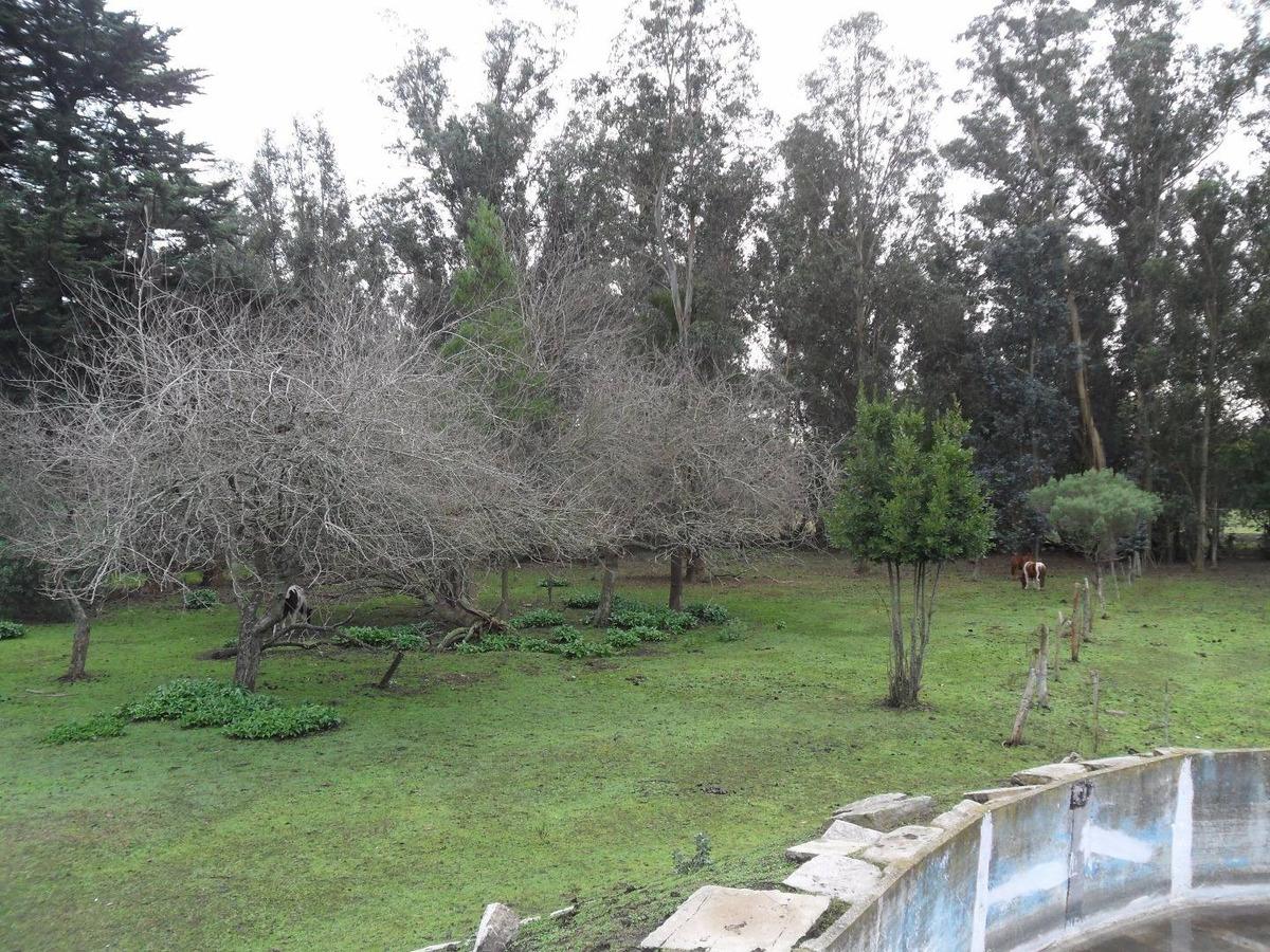 latorre prop vende campo de 4 hectareas,cerca de la ruta 11,del mar y playas,varios usos,hermosa arboleda