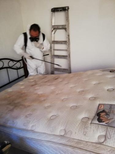 lavado de colchónes, vestiduras, sala, tapetes fumigación.