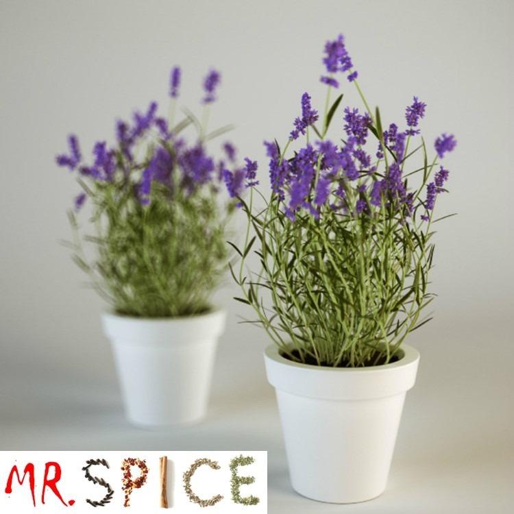 Lavanda verdadeira alfazema 200 sementes flor para mudas for Pianta lavanda in vaso